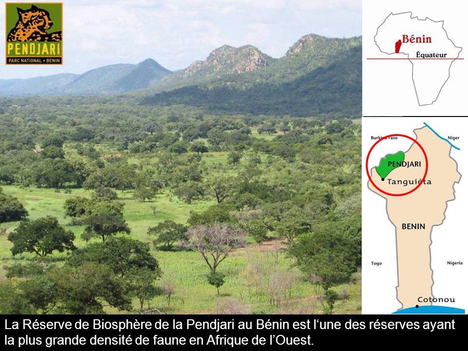 La Réserve de Biosphère de la Pendjari au Bénin est l'une des réserves ayant la plus grande densité de faune en Afrique de l'Ouest.