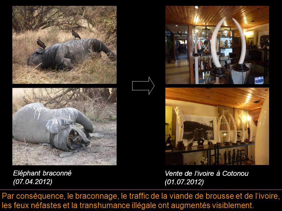 Par conséquence, le braconnage, le traffic de la viande de brousse et de l'ivoire, les feux néfastes et la transhumance illégale ont augmentés visiblement.