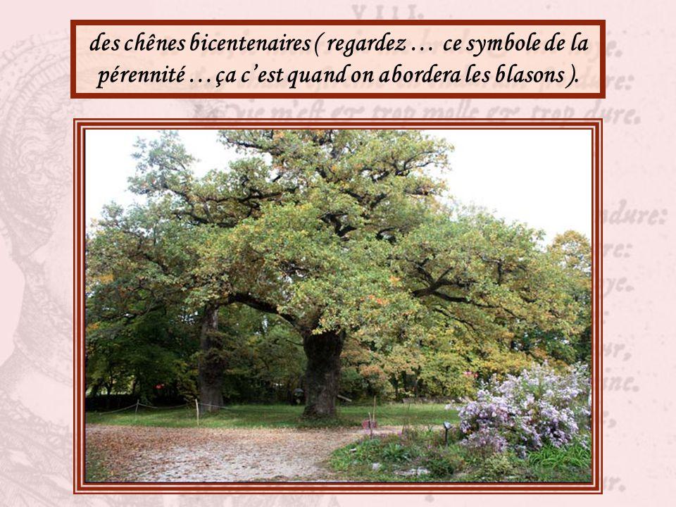 des cèdres bleus ( l'arbre du Liban, est-ce le moment d'aborder la question avec eux ? ),