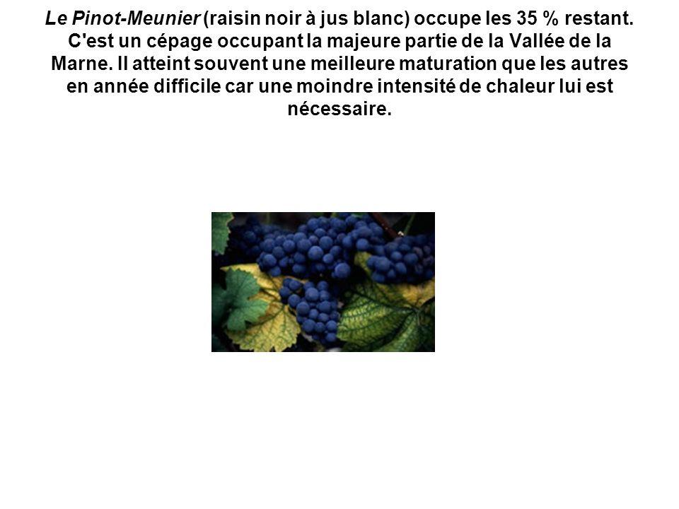 Le Pinot-Meunier (raisin noir à jus blanc) occupe les 35 % restant. C'est un cépage occupant la majeure partie de la Vallée de la Marne. Il atteint so