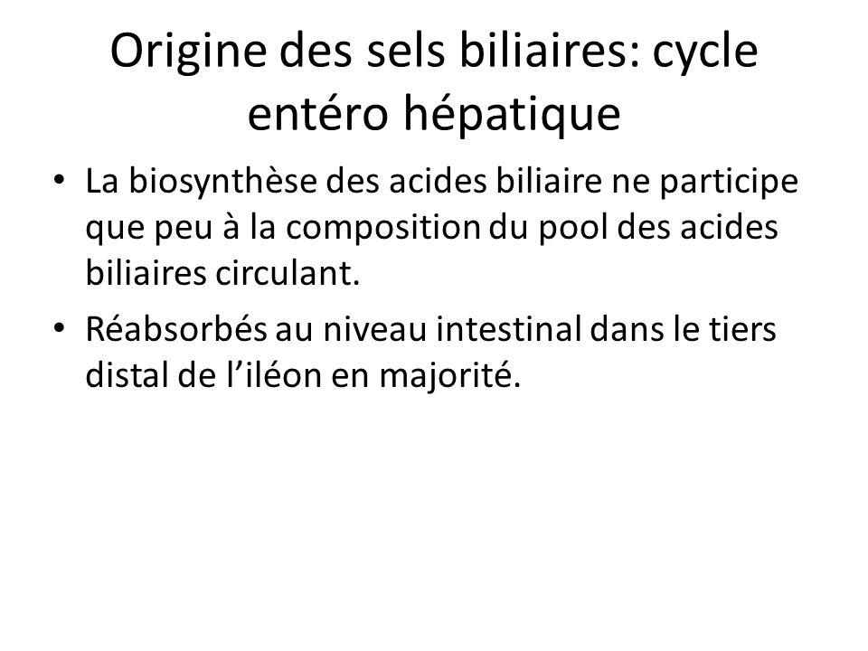 Origine des sels biliaires: cycle entéro hépatique La biosynthèse des acides biliaire ne participe que peu à la composition du pool des acides biliair