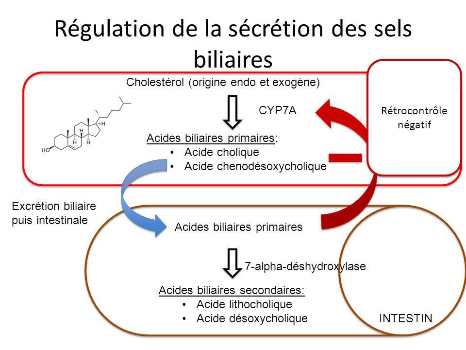 Régulation de la sécrétion des sels biliaires Cholestérol (origine endo et exogène) Acides biliaires primaires: Acide cholique Acide chenodésoxycholiq