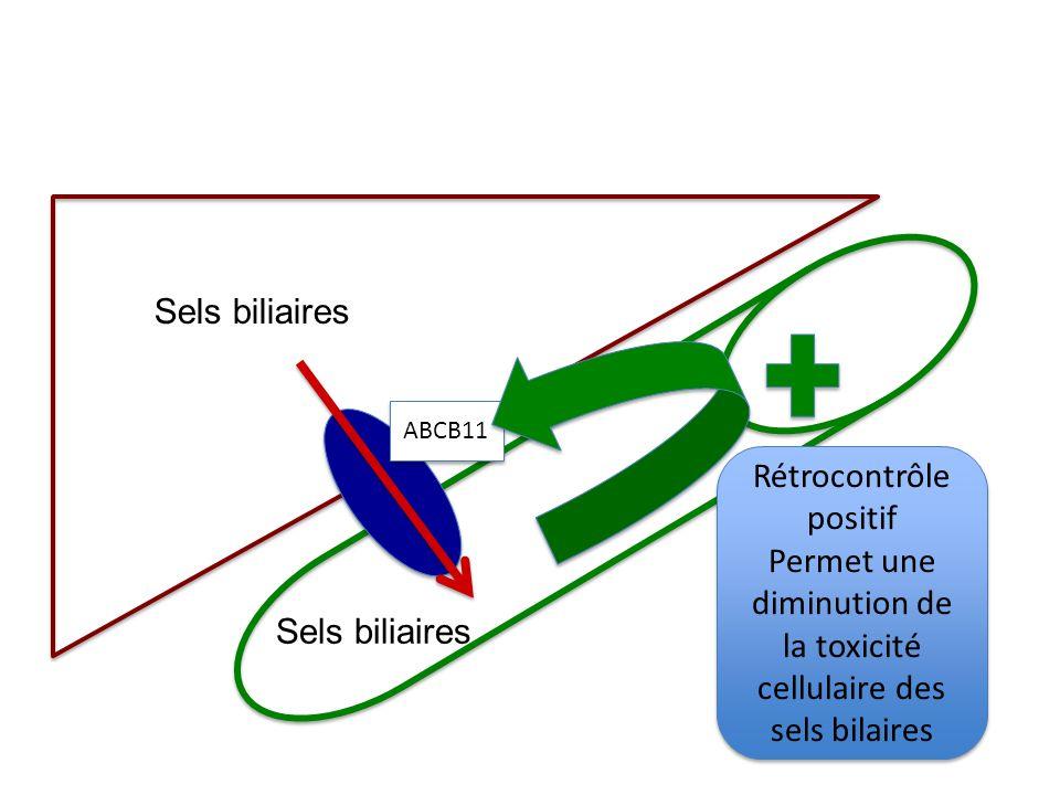ABCB11 Sels biliaires Rétrocontrôle positif Permet une diminution de la toxicité cellulaire des sels bilaires Rétrocontrôle positif Permet une diminut
