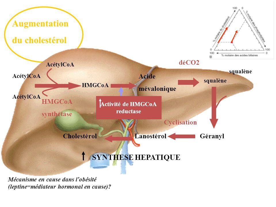 Augmentation du cholestérol squalène AcétylCoA HMGCoA Acide mévalonique squalène GéranylLanostérolCholestérol HMGCoA synthétase HMGCoA reductase déCO2