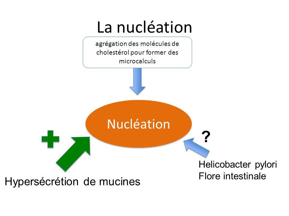 La nucléation Nucléation agrégation des molécules de cholestérol pour former des microcalculs Hypersécrétion de mucines Helicobacter pylori Flore inte