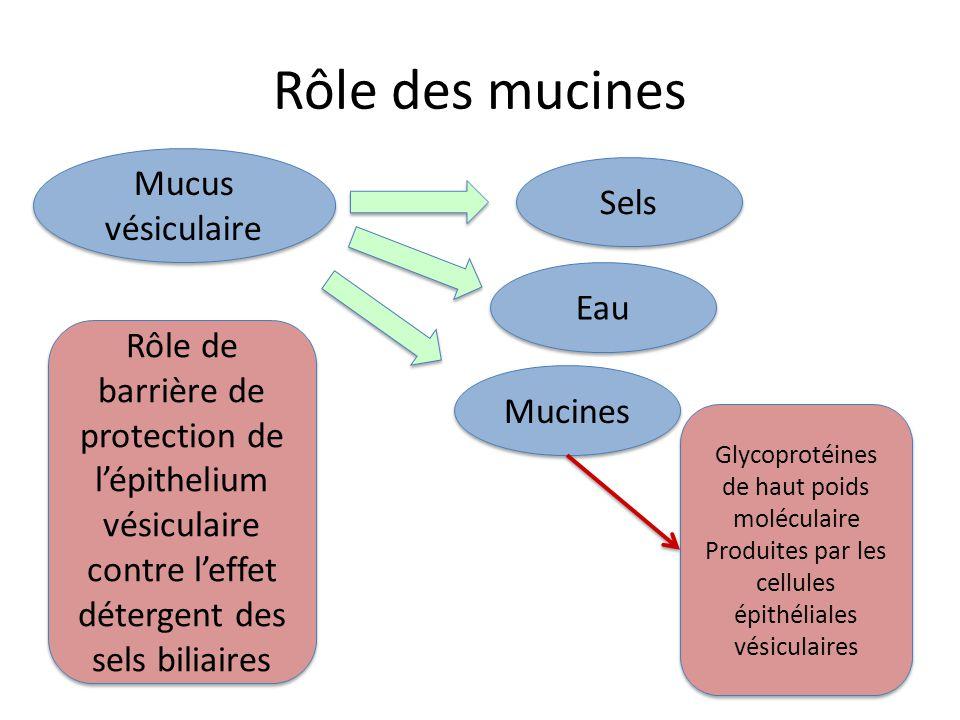 Rôle des mucines Mucus vésiculaire Sels Eau Mucines Rôle de barrière de protection de l'épithelium vésiculaire contre l'effet détergent des sels bilia
