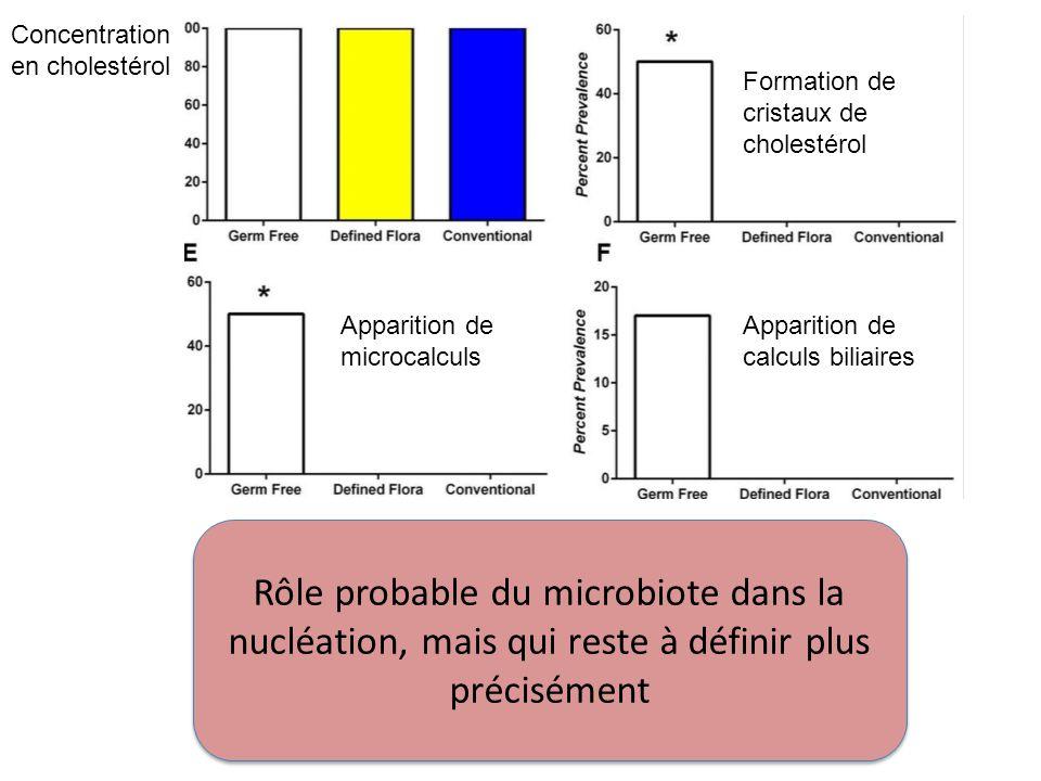 Formation de cristaux de cholestérol Apparition de microcalculs Apparition de calculs biliaires Rôle probable du microbiote dans la nucléation, mais q