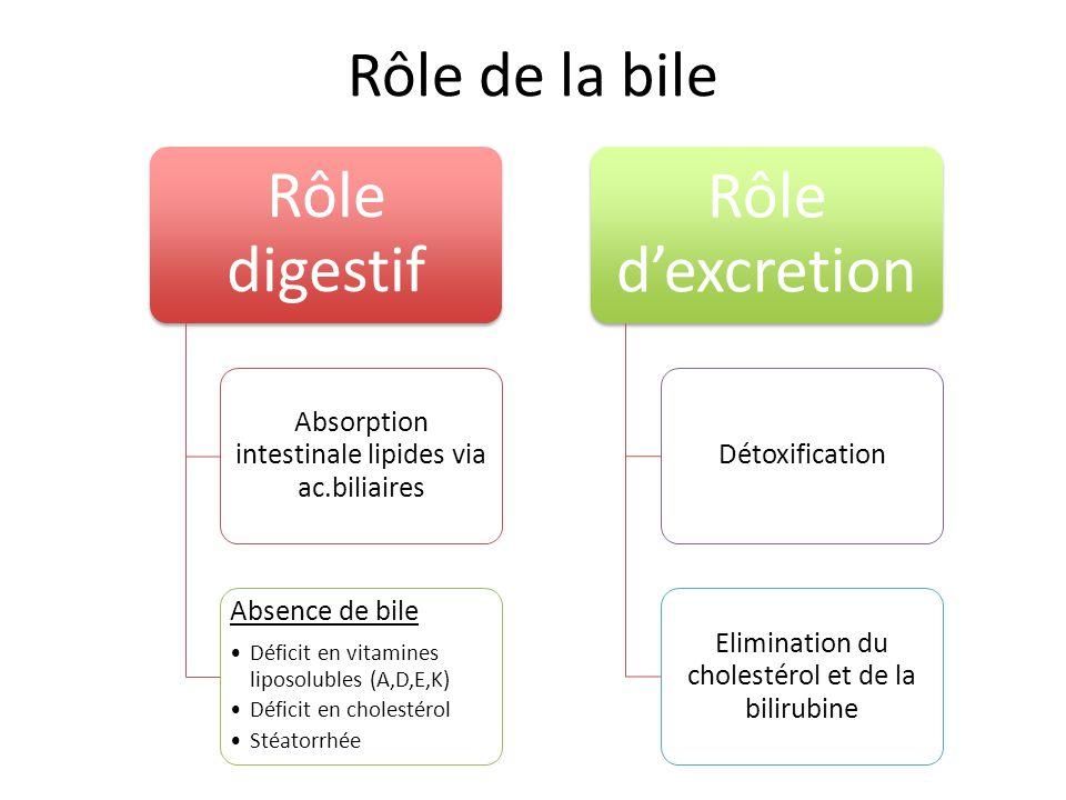 Rôle de la bile Rôle digestif Absorption intestinale lipides via ac.biliaires Absence de bile Déficit en vitamines liposolubles (A,D,E,K) Déficit en c