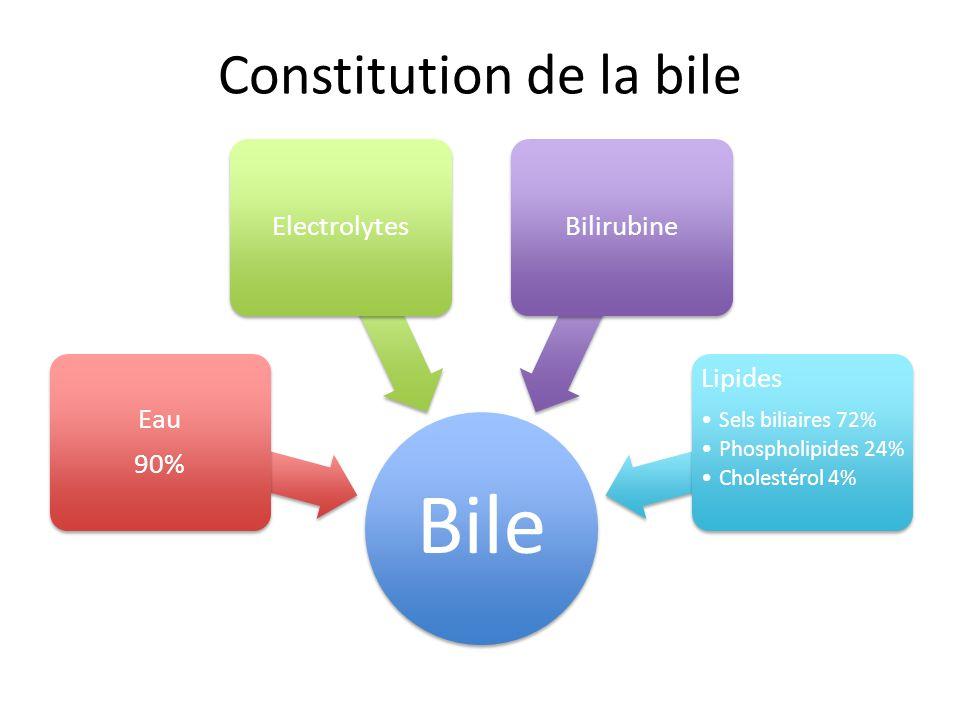 Bile Eau 90% ElectrolytesBilirubine Lipides Sels biliaires 72% Phospholipides 24% Cholestérol 4% Constitution de la bile