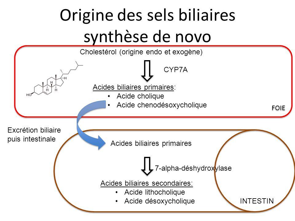 Origine des sels biliaires synthèse de novo Cholestérol (origine endo et exogène) Acides biliaires primaires: Acide cholique Acide chenodésoxycholique