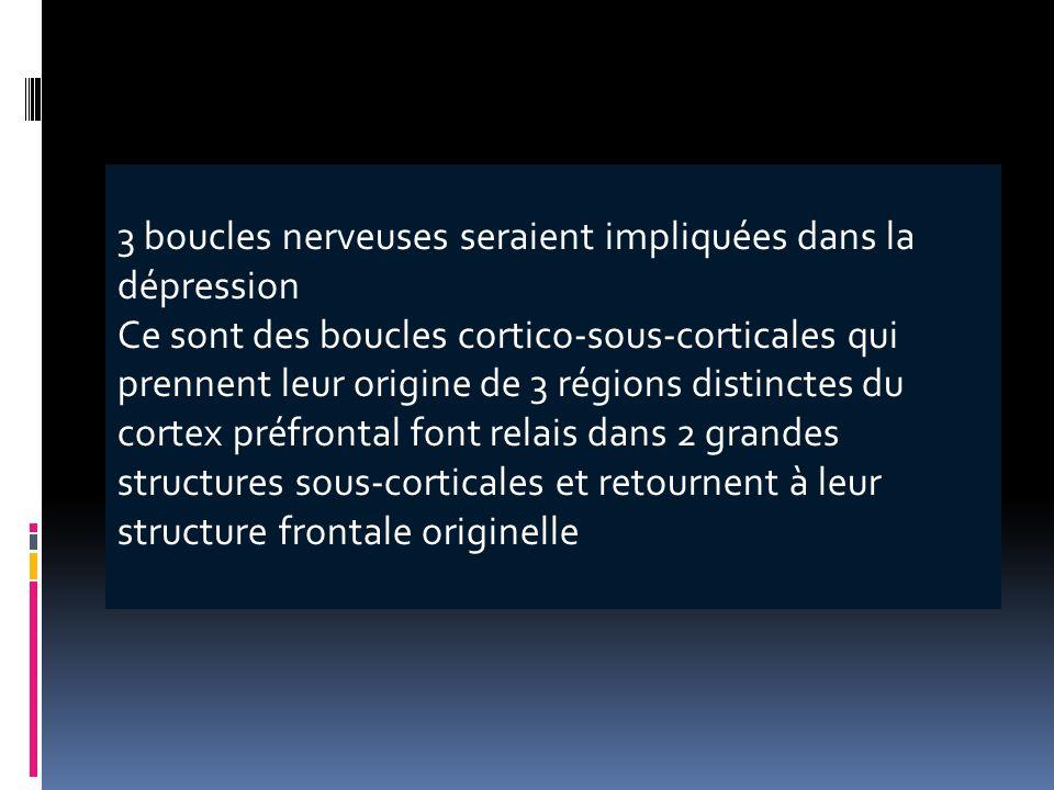 3 boucles nerveuses seraient impliquées dans la dépression Ce sont des boucles cortico-sous-corticales qui prennent leur origine de 3 régions distinct