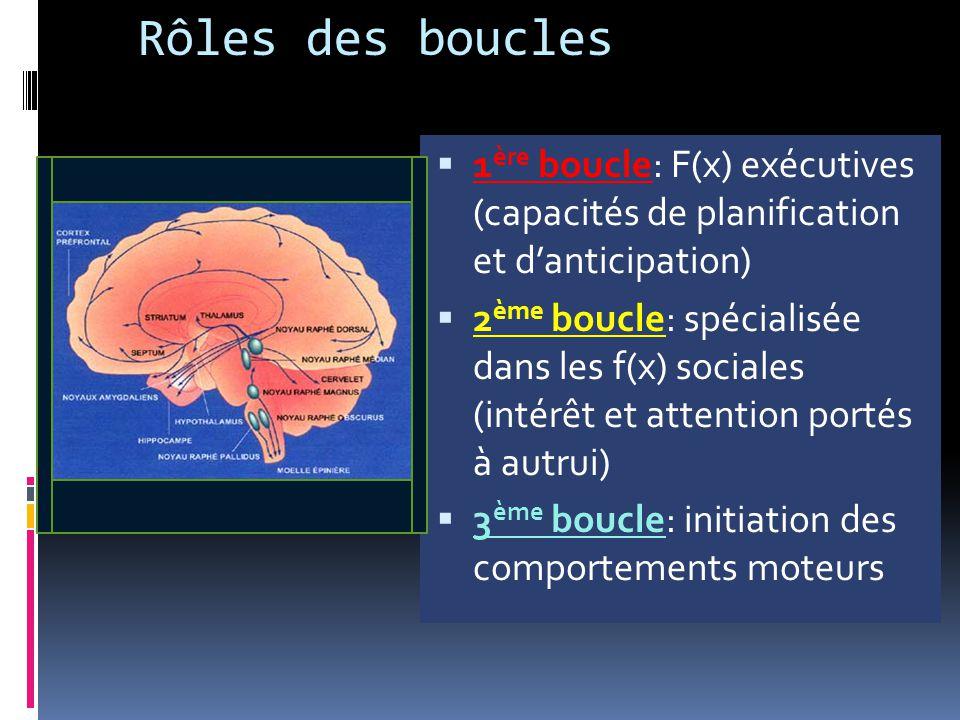 Rôles des boucles  1 ère boucle: F(x) exécutives (capacités de planification et d'anticipation)  2 ème boucle: spécialisée dans les f(x) sociales (i