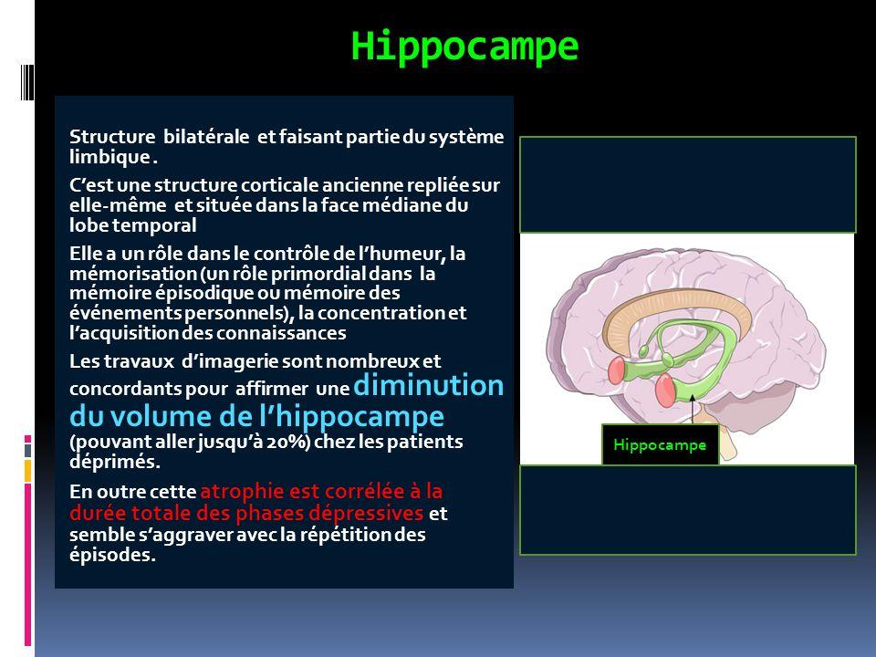 Structure bilatérale et faisant partie du système limbique. C'est une structure corticale ancienne repliée sur elle-même et située dans la face médian