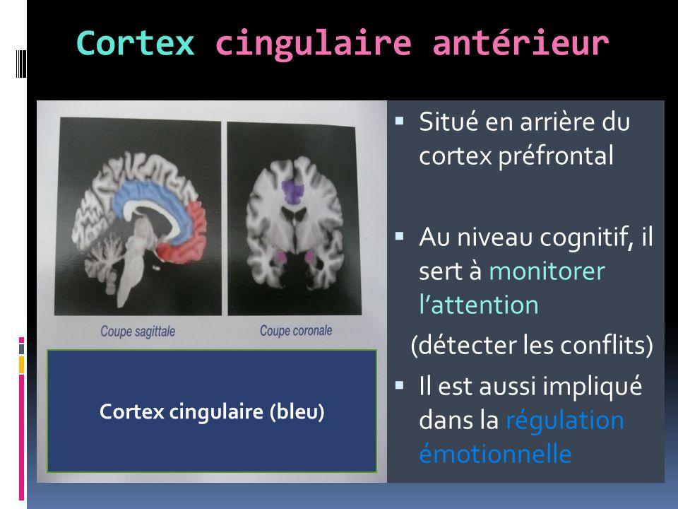 Cortex cingulaire antérieur  Situé en arrière du cortex préfrontal  Au niveau cognitif, il sert à monitorer l'attention (détecter les conflits)  Il