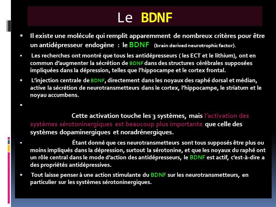 Le BDNF  Il existe une molécule qui remplit apparemment de nombreux critères pour être un antidépresseur endogène : le BDNF (brain derived neurotroph