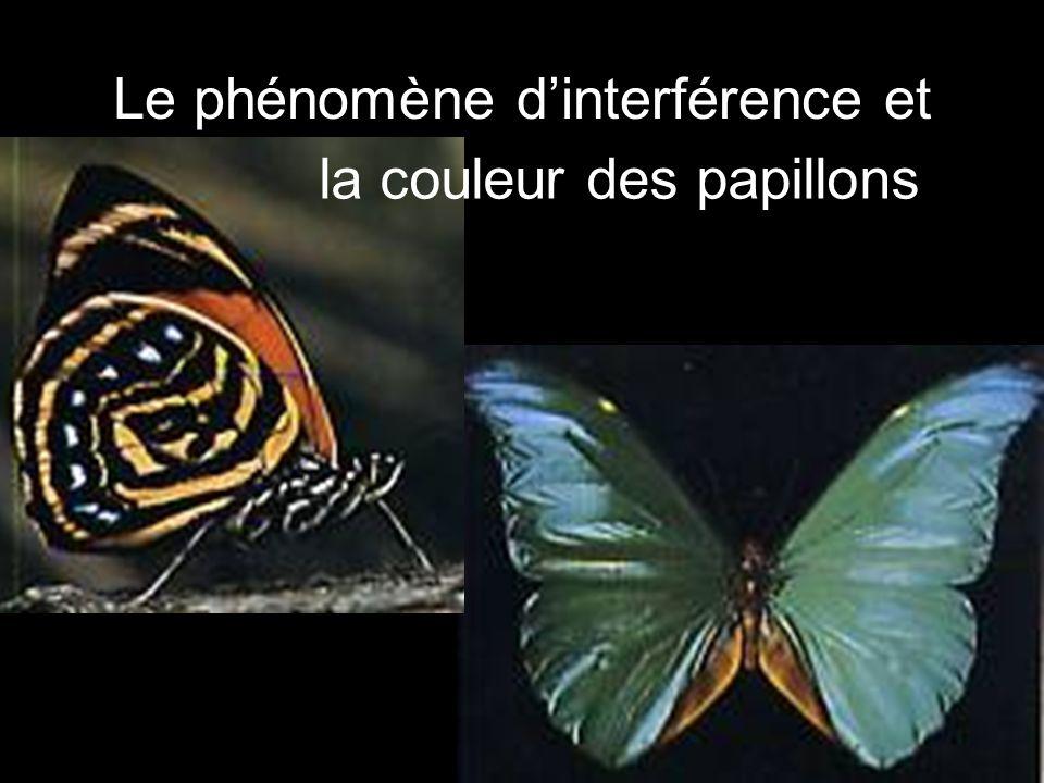 Le phénomène d'interférence et la couleur des papillons