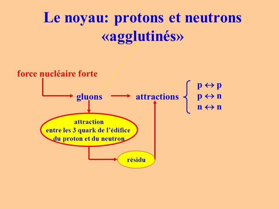 Le noyau: protons et neutrons «agglutinés» force nucléaire forte gluonsattractions p  p p  n n  n attraction entre les 3 quark de l'édifice du prot