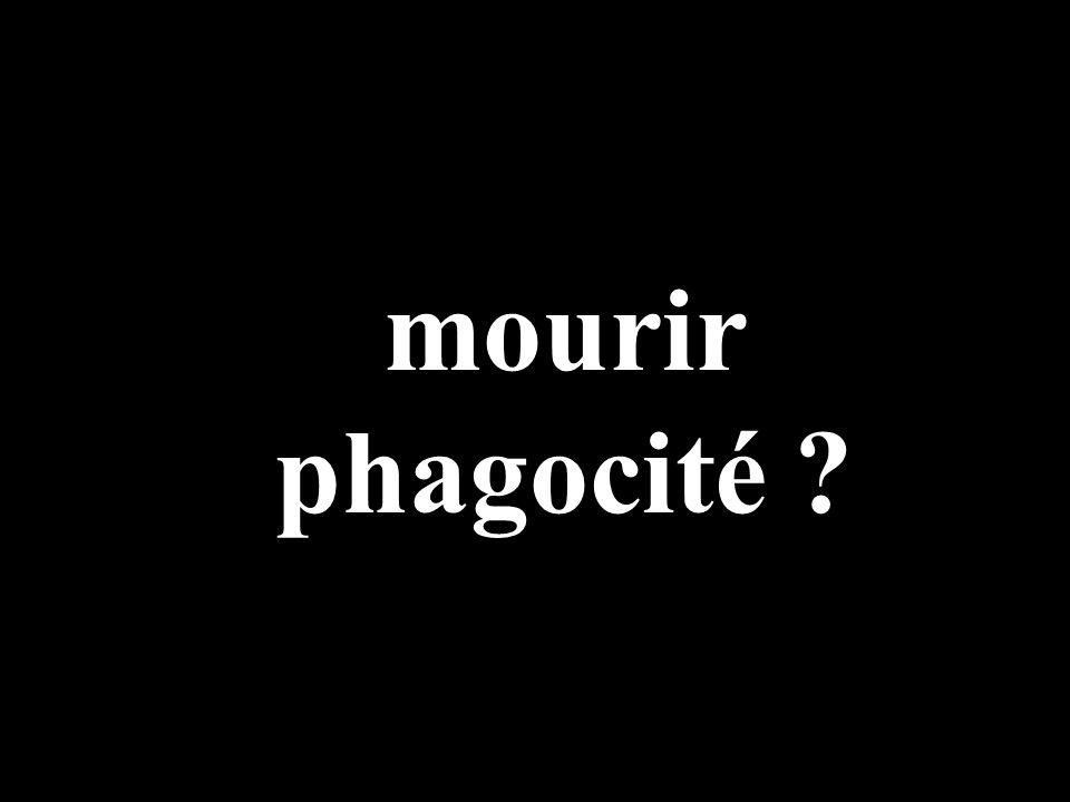 mourir phagocité ?