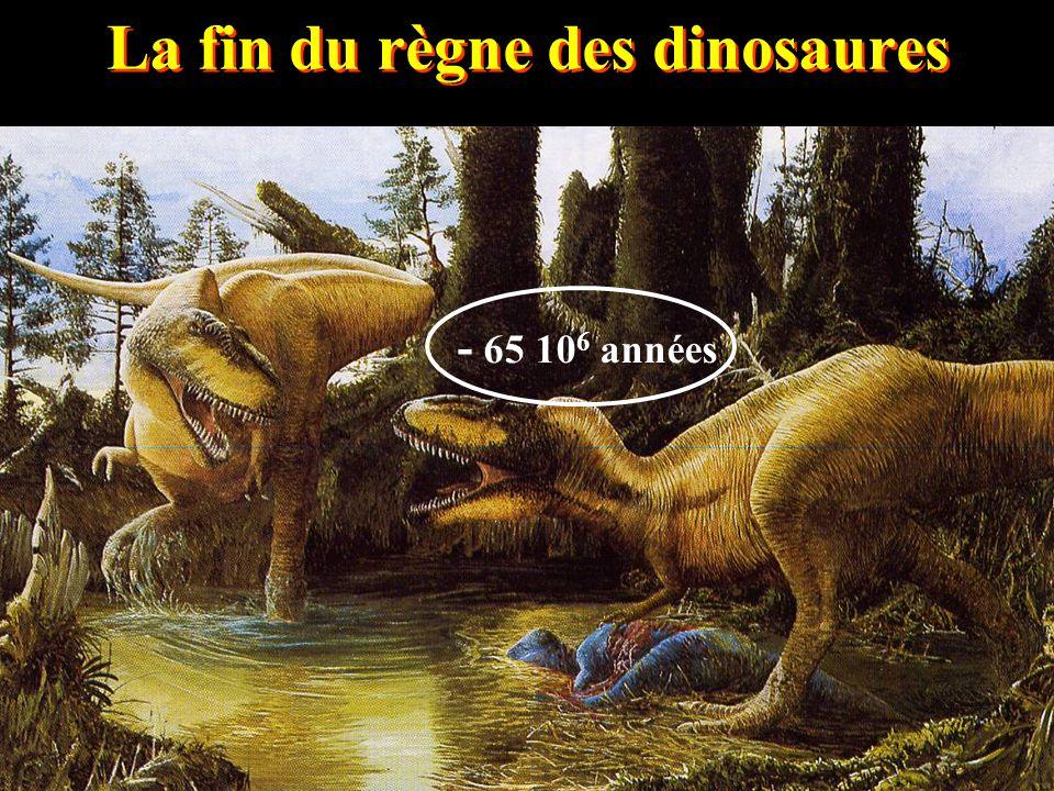 La fin du règne des dinosaures - 65 10 6 années