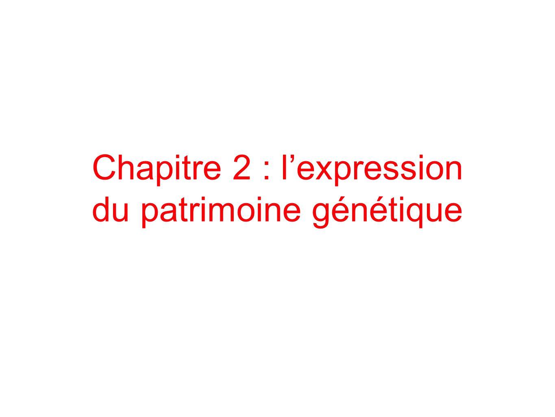 Chapitre 2 : l'expression du patrimoine génétique