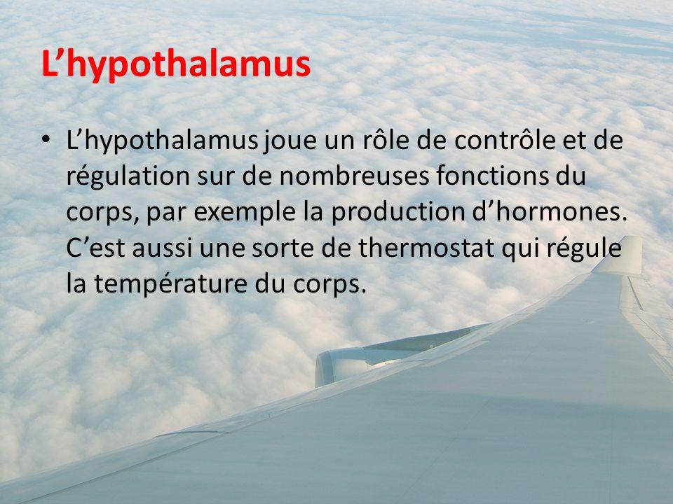 L'hypothalamus L'hypothalamus joue un rôle de contrôle et de régulation sur de nombreuses fonctions du corps, par exemple la production d'hormones. C'