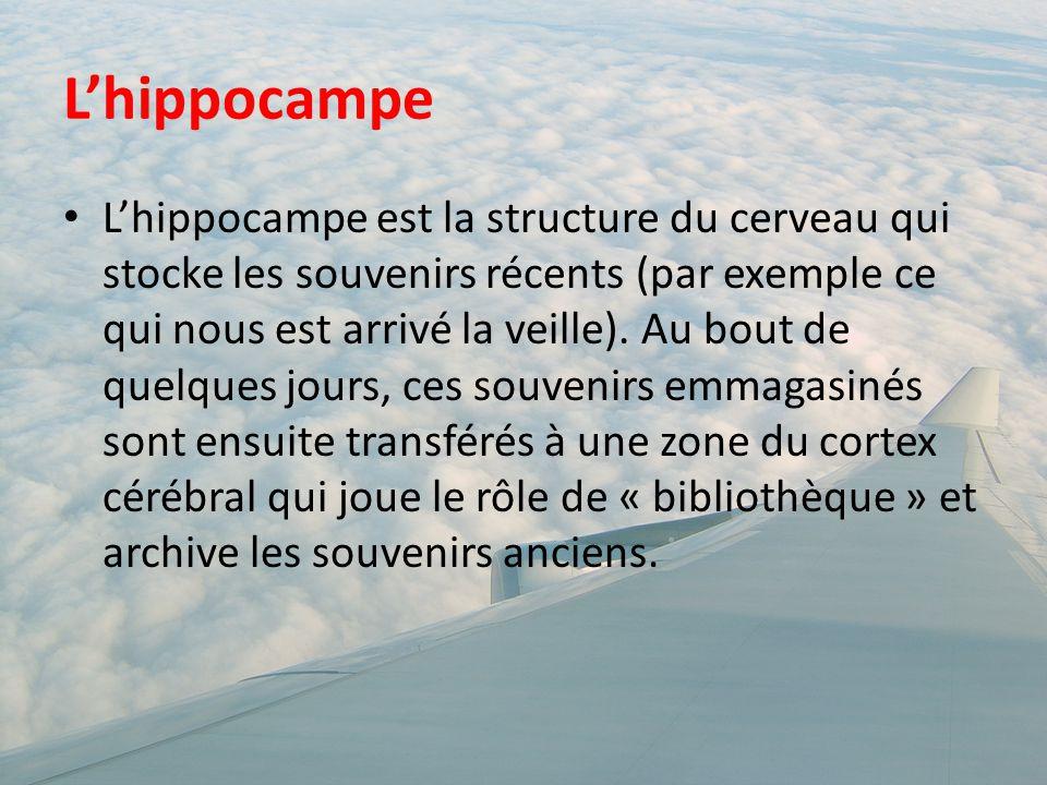 L'hippocampe L'hippocampe est la structure du cerveau qui stocke les souvenirs récents (par exemple ce qui nous est arrivé la veille). Au bout de quel