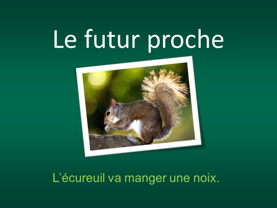 Le futur proche L'écureuil va manger une noix.