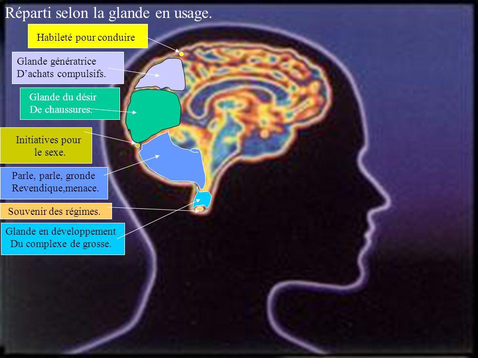 Pour continuer disséquons le mystère du fonctionnement du ….. cerveau masculin :