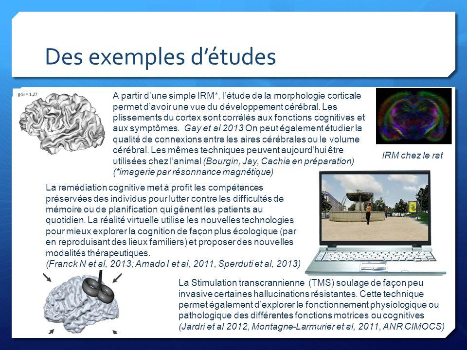 Des exemples d'études A partir d'une simple IRM*, l'étude de la morphologie corticale permet d'avoir une vue du développement cérébral. Les plissement
