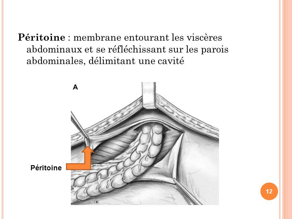 Péritoine : membrane entourant les viscères abdominaux et se réfléchissant sur les parois abdominales, délimitant une cavité Péritoine 12
