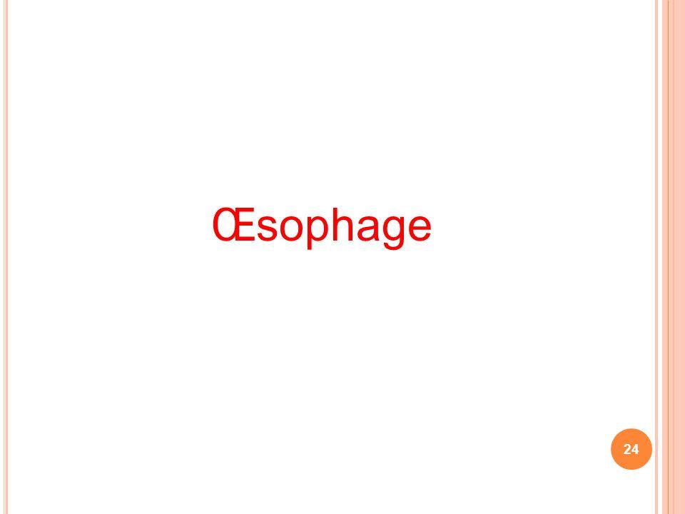 Œsophage 24