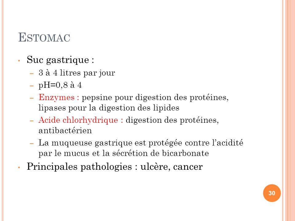 E STOMAC Suc gastrique : – 3 à 4 litres par jour – pH=0,8 à 4 – Enzymes : pepsine pour digestion des protéines, lipases pour la digestion des lipides