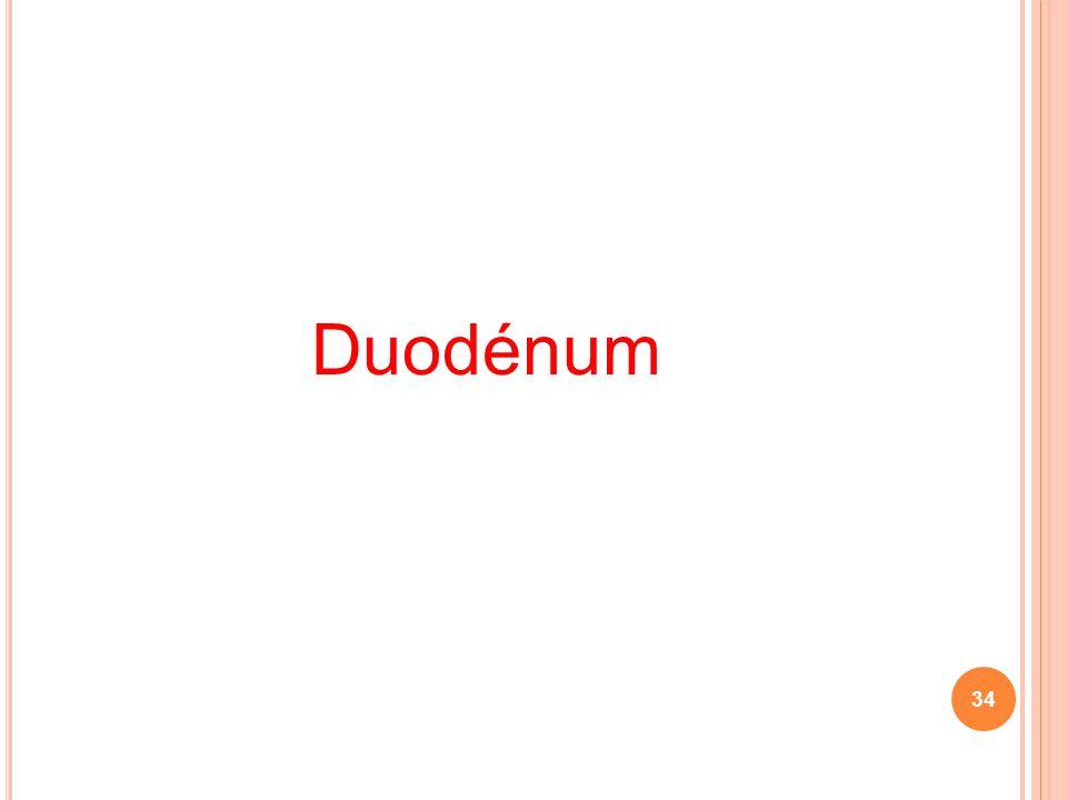 Duodénum 34