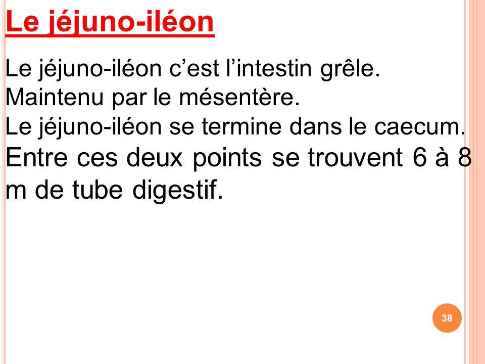 Le jéjuno-iléon Le jéjuno-iléon c'est l'intestin grêle. Maintenu par le mésentère. Le jéjuno-iléon se termine dans le caecum. Entre ces deux points se