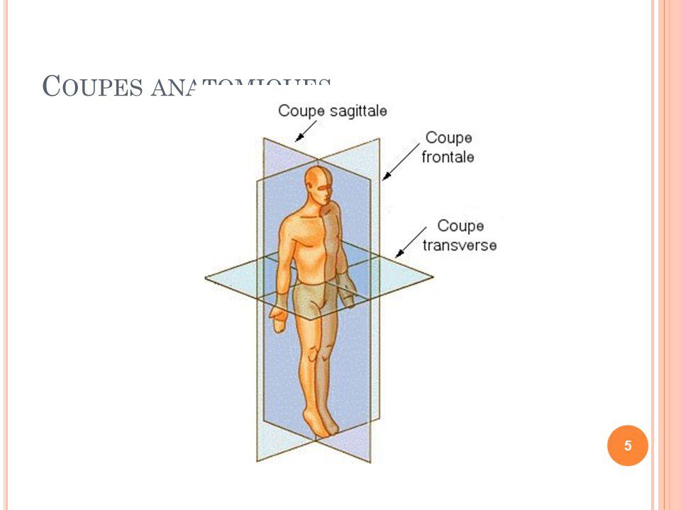 C OUPES ANATOMIQUES 5