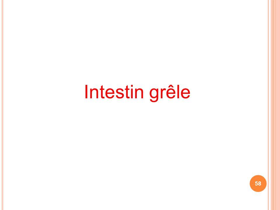 Intestin grêle 58