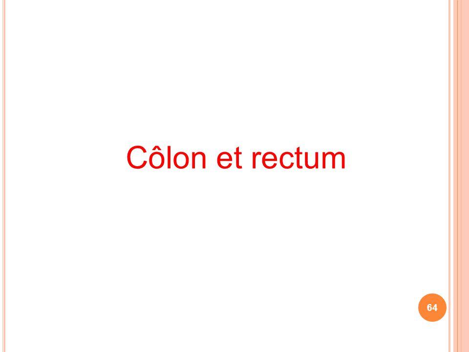 Côlon et rectum 64