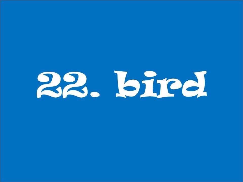 22. bird