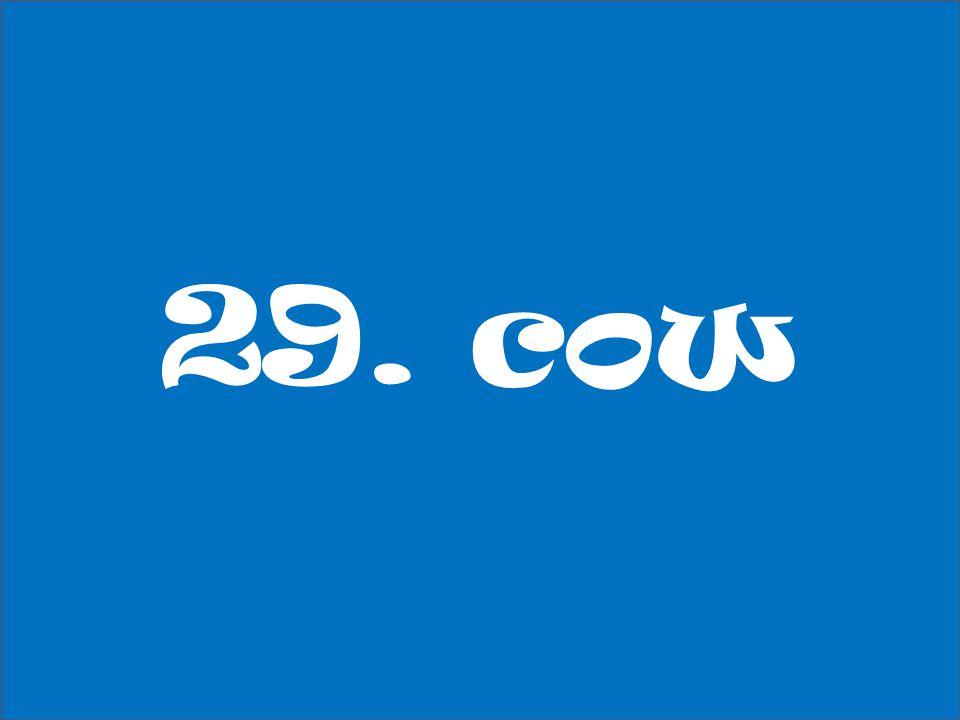 29. cow