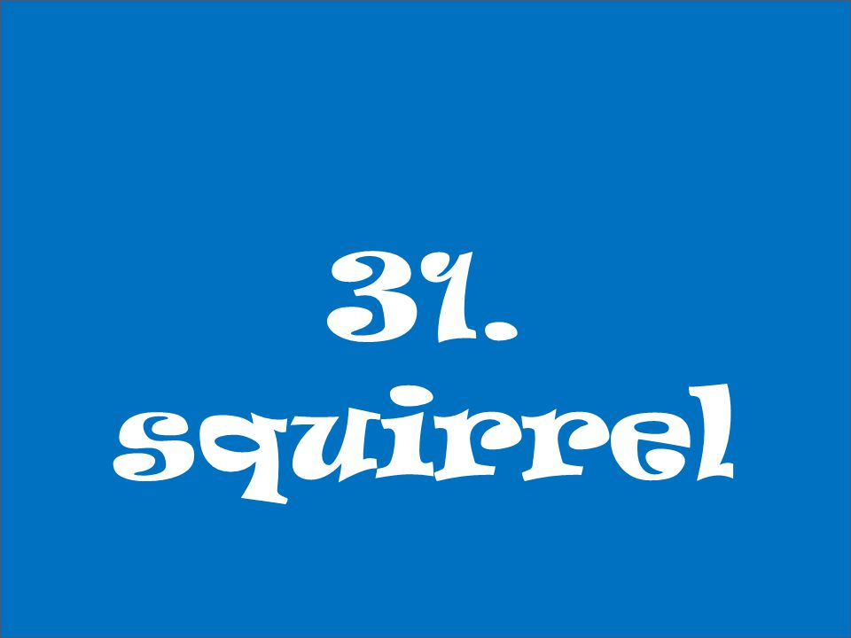 31. squirrel