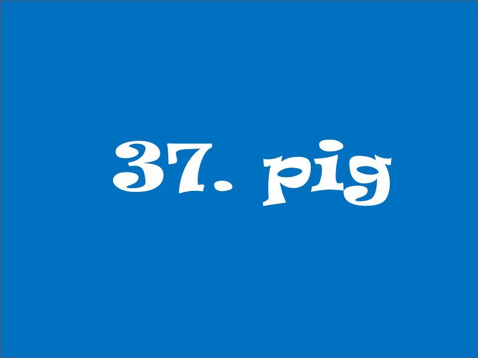 37. pig