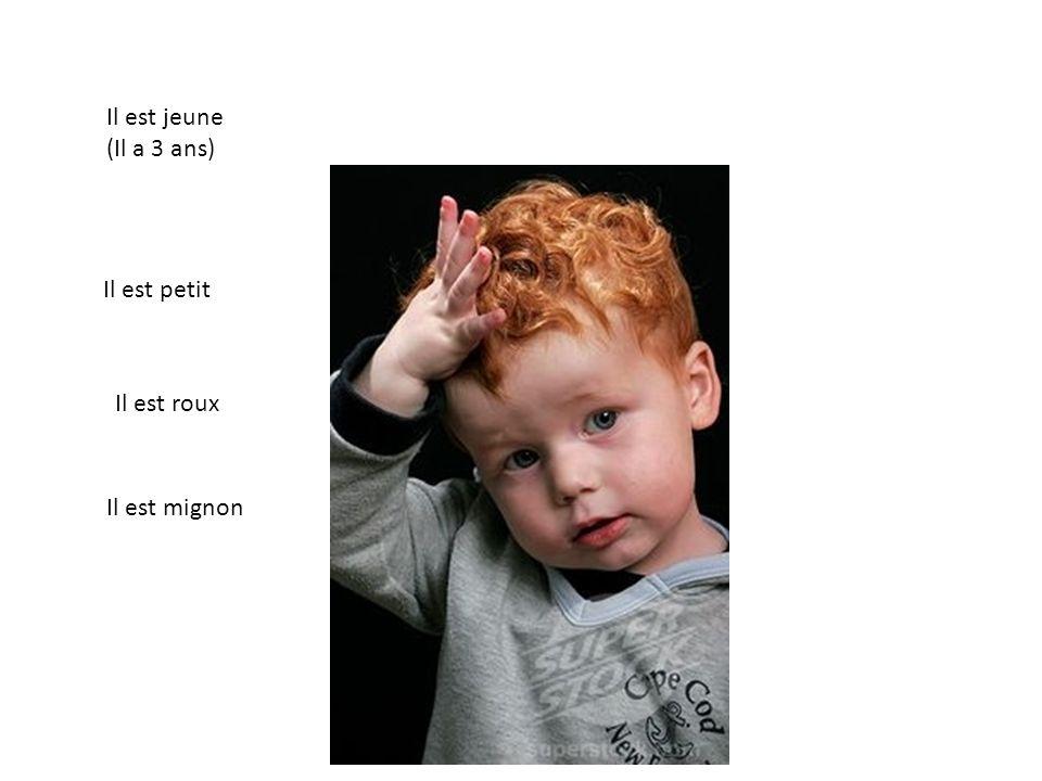 Il est jeune (Il a 3 ans) Il est roux Il est mignon Il est petit