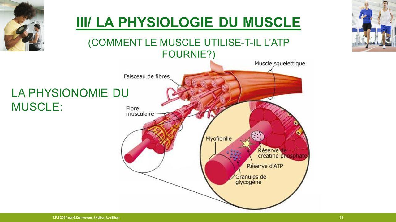 III/ LA PHYSIOLOGIE DU MUSCLE (COMMENT LE MUSCLE UTILISE-T-IL L'ATP FOURNIE?) LA PHYSIONOMIE DU MUSCLE: 12T.P.E 2014 par G.Kermorvant; J.Hallier; J.Le