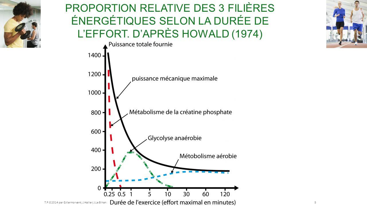 PROPORTION RELATIVE DES 3 FILIÈRES ÉNERGÉTIQUES SELON LA DURÉE DE L'EFFORT. D'APRÈS HOWALD (1974) T.P.E 2014 par G.Kermorvant; J.Hallier; J.Le Bihan5