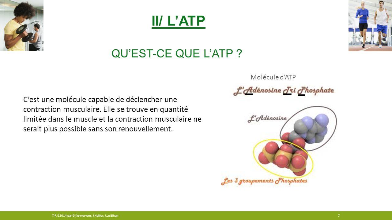 II/ L'ATP QU'EST-CE QUE L'ATP ? C'est une molécule capable de déclencher une contraction musculaire. Elle se trouve en quantité limitée dans le muscle