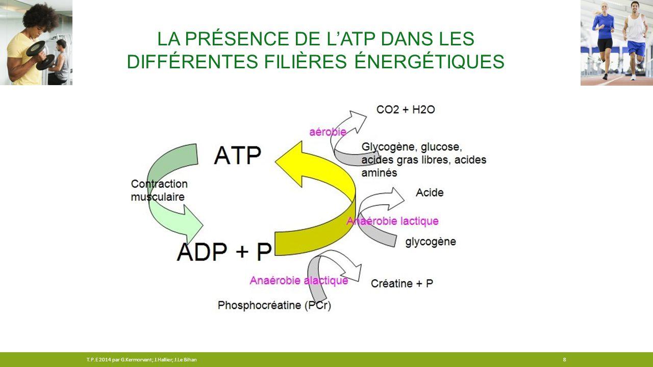 LA PRÉSENCE DE L'ATP DANS LES DIFFÉRENTES FILIÈRES ÉNERGÉTIQUES 8T.P.E 2014 par G.Kermorvant; J.Hallier; J.Le Bihan