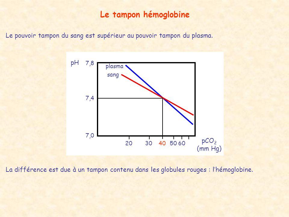 Le tampon hémoglobine Le pouvoir tampon du sang est supérieur au pouvoir tampon du plasma. plasma sang pCO 2 (mm Hg) 2030405060 7,4 7,8 7,0 pH La diff