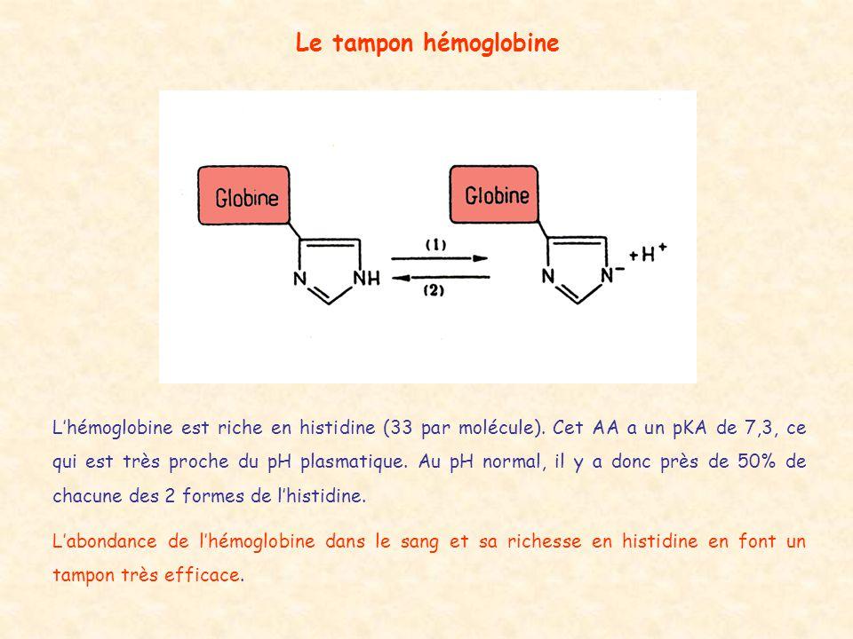Le tampon hémoglobine L'hémoglobine est riche en histidine (33 par molécule). Cet AA a un pKA de 7,3, ce qui est très proche du pH plasmatique. Au pH