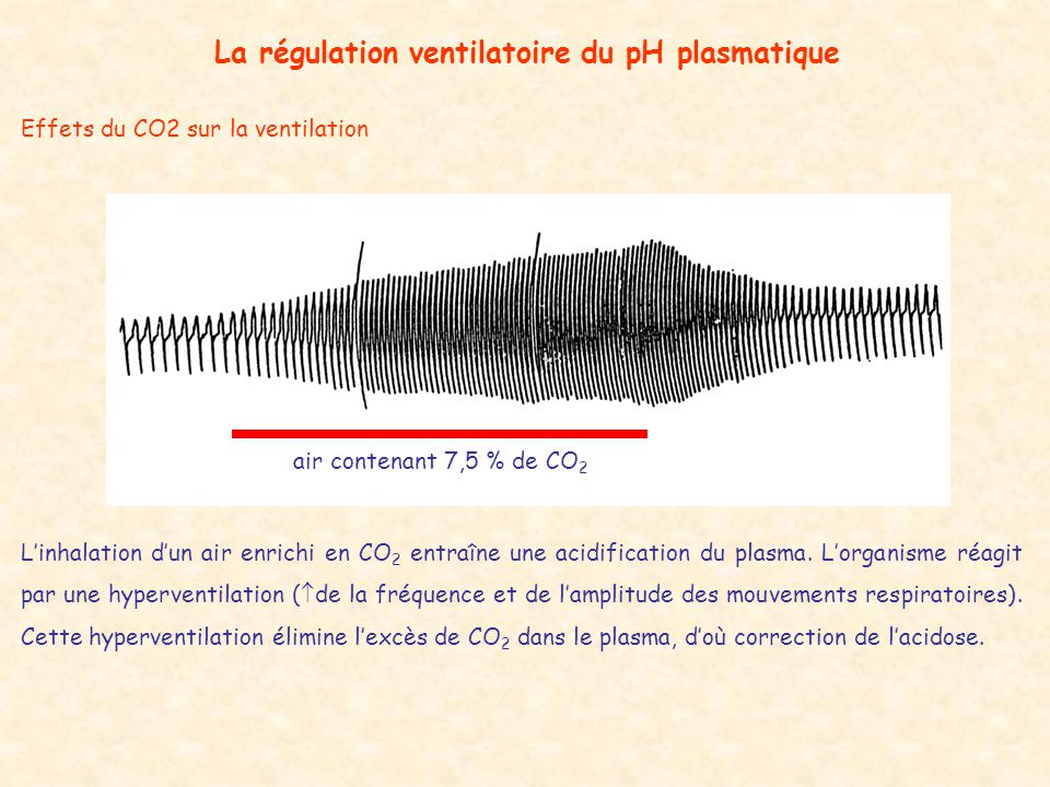 Effets du CO2 sur la ventilation La régulation ventilatoire du pH plasmatique air contenant 7,5 % de CO 2 L'inhalation d'un air enrichi en CO 2 entraîne une acidification du plasma.