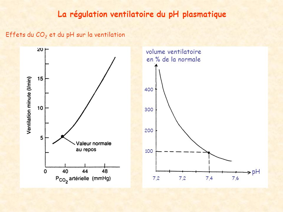 Effets du CO 2 et du pH sur la ventilation La régulation ventilatoire du pH plasmatique pH volume ventilatoire en % de la normale 100 200 300 400 7,47,2 7,6